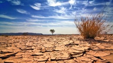 arid-soil-bush-01