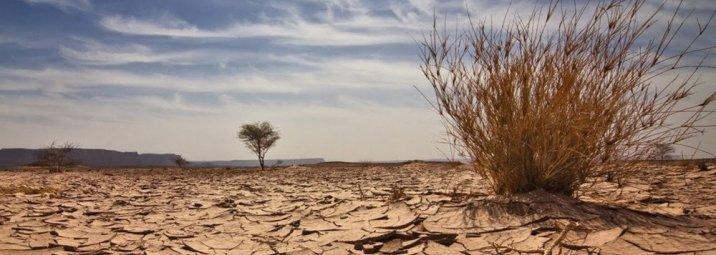 arid-soil-bush-02