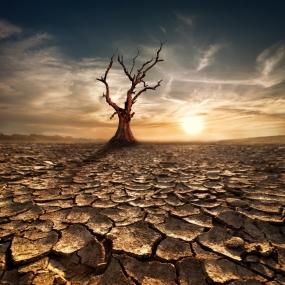 arid-soil-bush-03