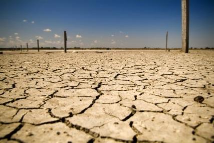 arid-soil-bush-04