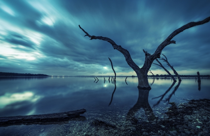 Blue-afternoon-lake-dry-tree-HD-01