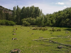 Praderas próximas al río Caslilla, Segovia-07