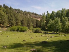 Praderas próximas al río Caslilla, Segovia-08