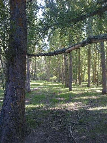 Bosques del río Caslilla - 3-6-2014-157