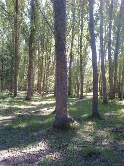 Bosques del río Caslilla - 3-6-2014-158