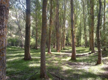 Bosques del río Caslilla-5