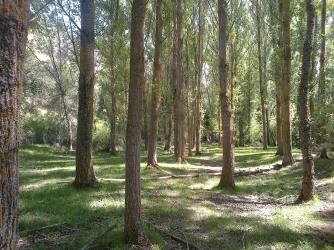 Caslilla-River-3-6-2014-160s