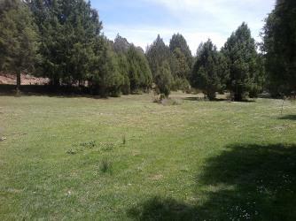 Bosques del río Caslilla - 3-6-2014-219