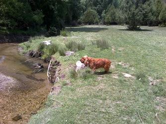 Bosques del río Caslilla - 3-6-2014-222