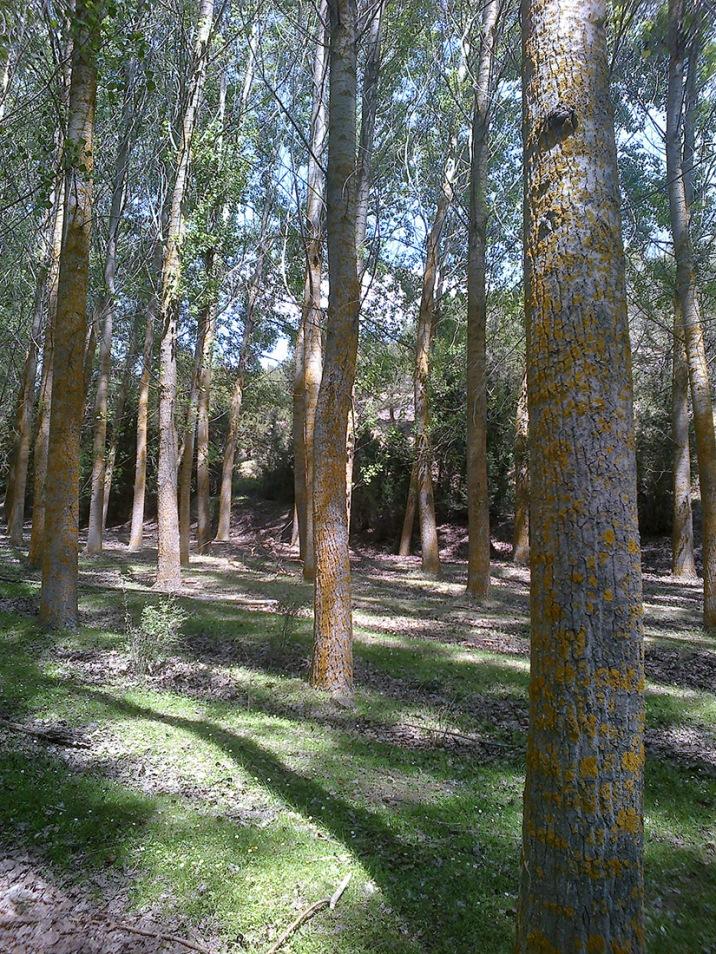 Bosques del río Caslilla-1