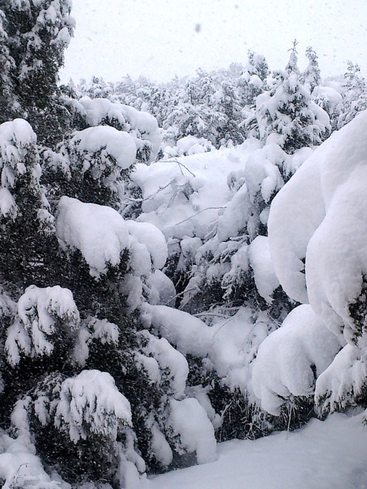 Monte de Los Cortos. Nevada del 6-2-2018-03
