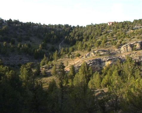 El Monte de Los Cortos - Forest inside
