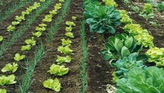 produccion-agricola-ecologica-01
