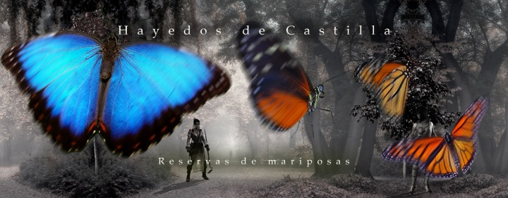 FN-Reservas-de-mariposas-2b