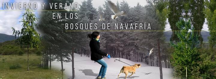 FNP-Bosques-de-Navafria-2b